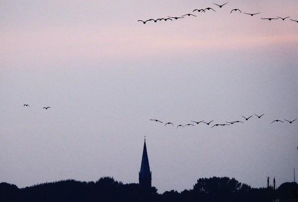 Vögel-fliegen-gen-Süden (3)