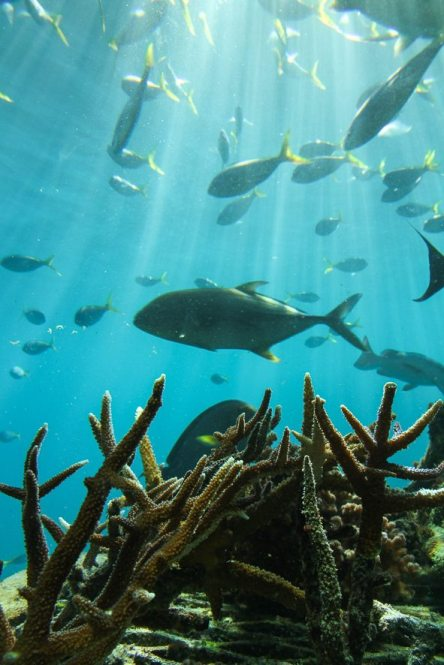 [:fr]Faire du snorkeling à la grande barrière de corail[:en]snorkelling the great barrier reef [:]