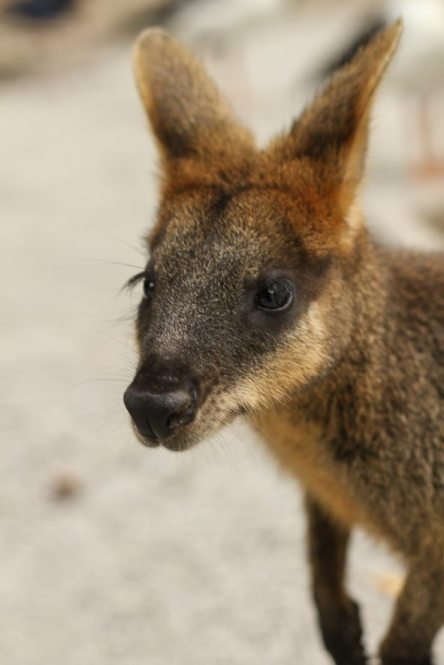 Wildlife Habitat, Port Douglas