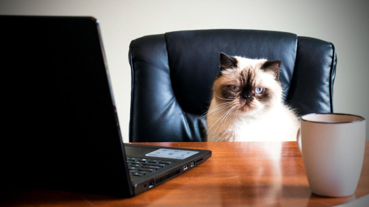 Financement participatif : pourquoi votre chat peut donner mais pas prêter ?