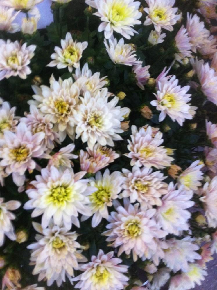 Fleur de papier soie pour enfants / flores de papel seda para niños (1/6)