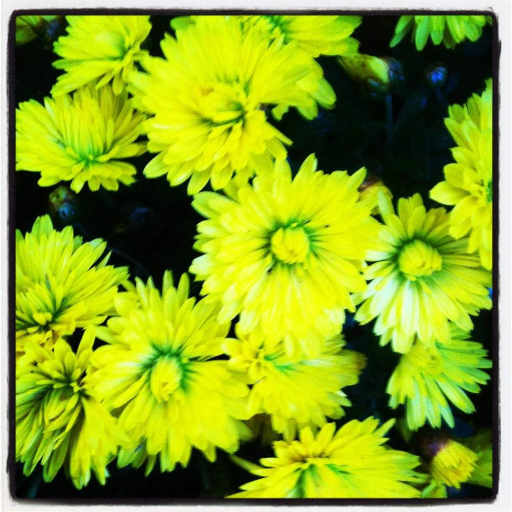 Fleur de papier soie pour enfants / flores de papel seda para niños (3/6)