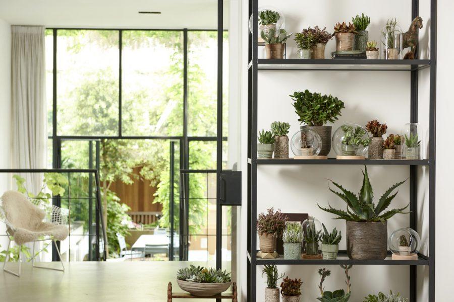 les plantes grasses culture et entretien le blog delbard. Black Bedroom Furniture Sets. Home Design Ideas