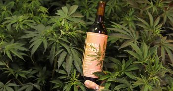 Rebel Coast Winery dévoile un vin infusé à la marijuana