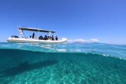 Barco de aproximão das baleias