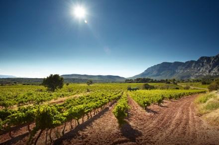 Os vinhedos de Sainte Victoire