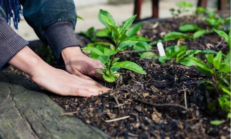 Entretien du jardin facile