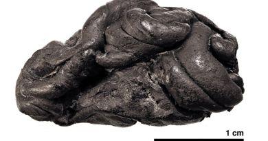 Découverte d'un chewing-gum préhistorique - Le blog du hérisson