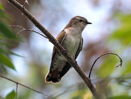 La disparition des oiseaux dans les campagnes - Le blog du hérisson