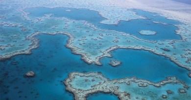 Sauver la Grande Barrière de corail - Le blog du hérisson
