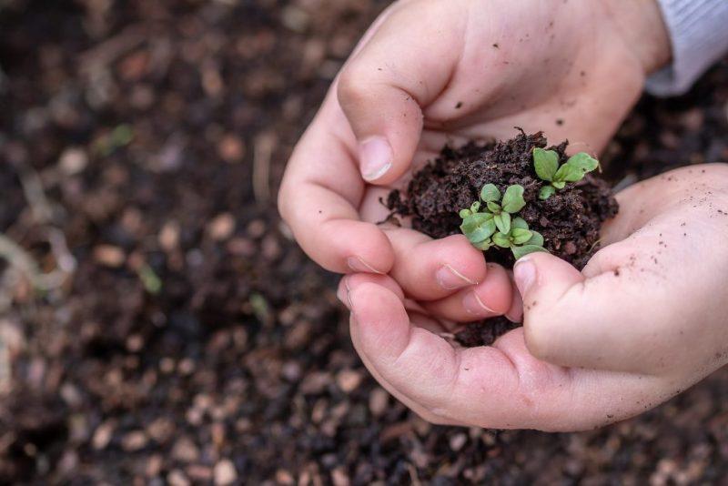 Les enfants et l'environnement : sensibiliser sans angoisser - Le blog du hérisson