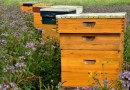 Extraction du miel : de la ruche à votre tartine - Le blog du hérisson