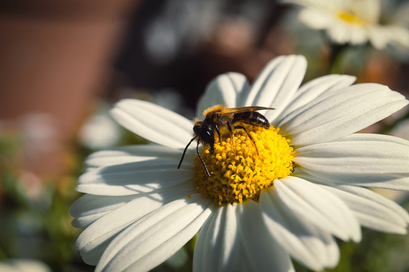 Récolte du miel - Le blog du hérisson