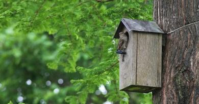 Comment installer un nichoir à oiseaux ? - Le blog du hérisson