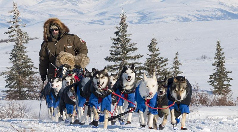 Iditarod : une course de traîneaux mythique - Le blog du hérisson