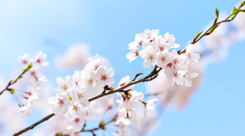 Cinq jeux d'écriture pour célébrer le printemps - Le blog du hérisson