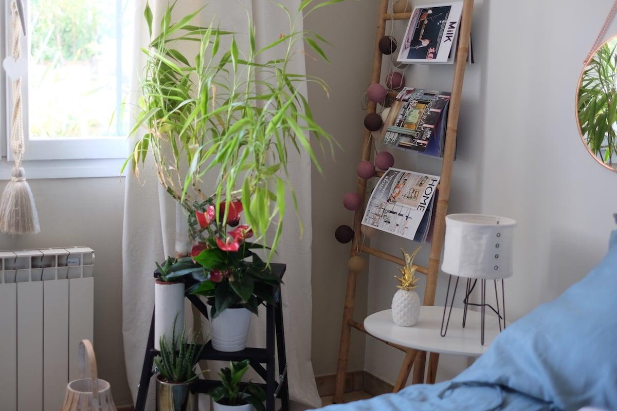 Décoration-interieur-plantes-