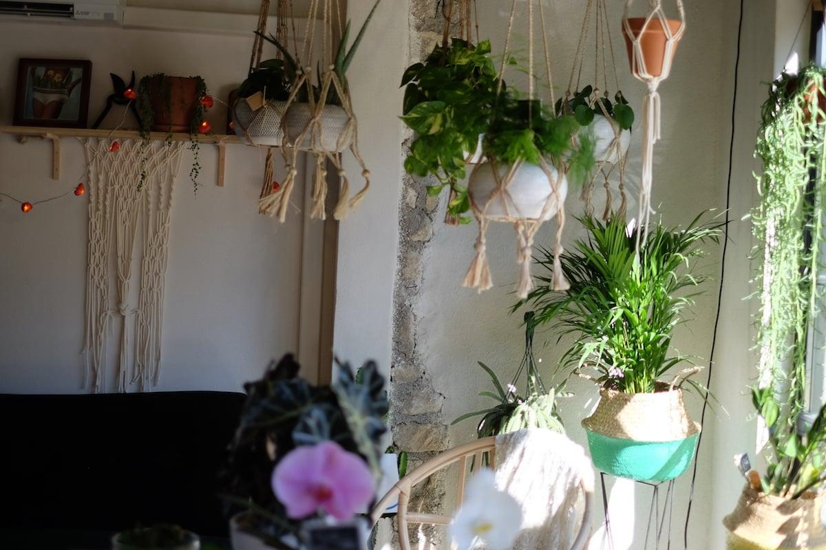 Fleurs-boutique-Marché-du-lez-Montpellier-plantes