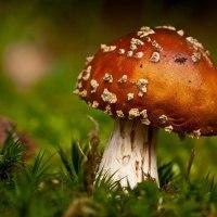 12 conseils sur la cueillette des champignons