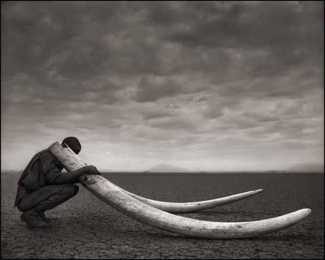 photo braconneur elephant