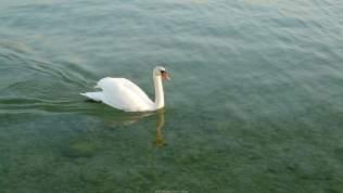 Promenade sur le lac