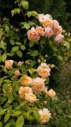 Edimbourg - Royal Botanic Garden