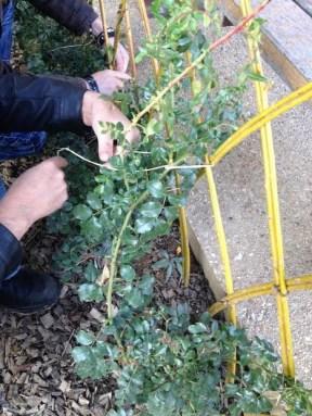 L'ESAT Ecodair au jardin Rosa Luxembourg