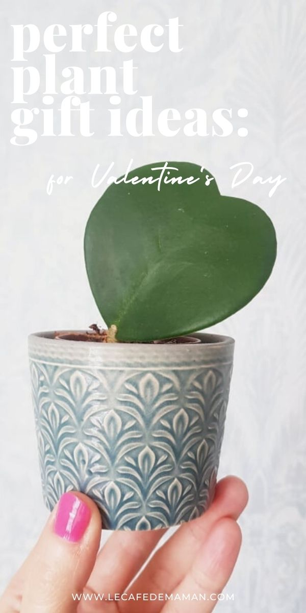valentines day plant gift ideas