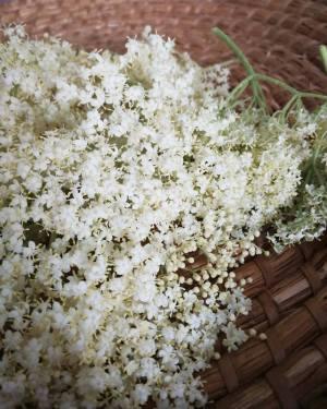 elderflower syrup blossoms