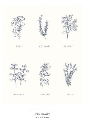 kitchen herb poster