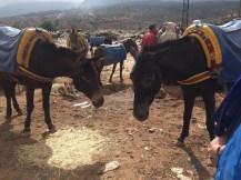 Marché aux ânes, Imlil