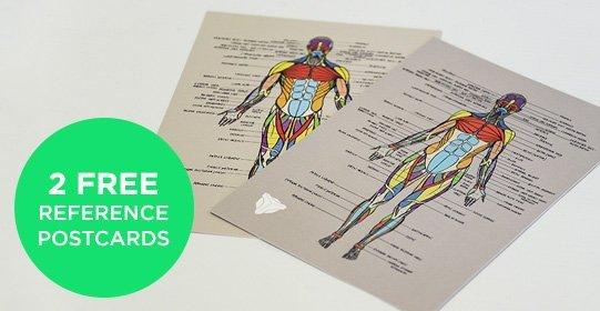 Apprendre l'anatomie grâce à un écorché + review de l