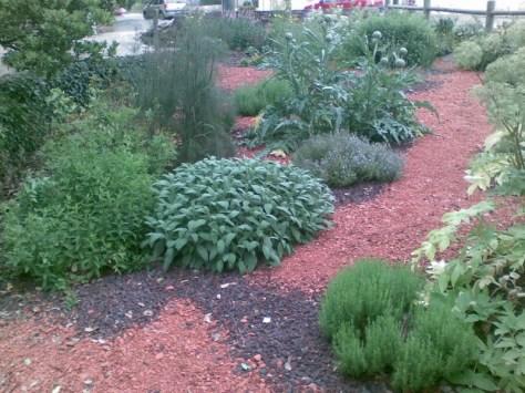 le jardin des aromatiques prend vie
