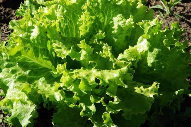 salade2011