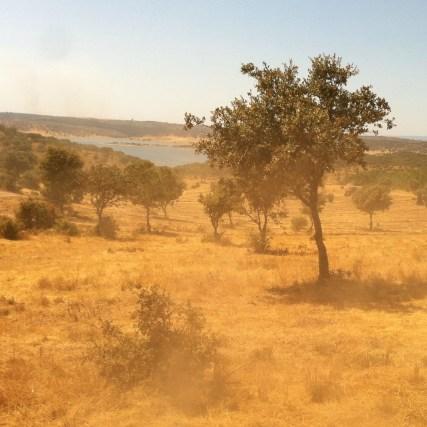 Wüstenoase Idanha-a-Nova