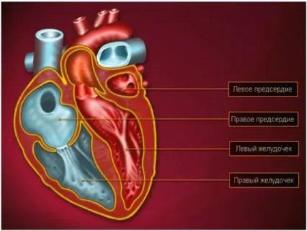 Применение противопоказано при инфаркте миокарда правого желудочка. Инфаркт правого желудочка и гипотония. Поражения папиллярных мышц