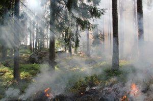 fumée feu forêt