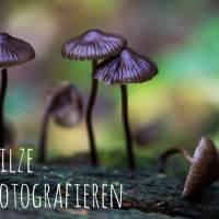 Pilze - überall Pilze