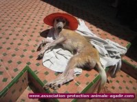 association-protection-animale-agadir-02