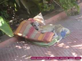 association-protection-animale-agadir-04
