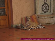 association-protection-animale-agadir-11