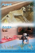 association-protection-animale-agadir-taghazout-00