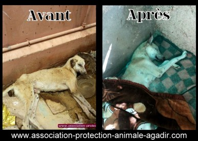 association-protection-animale-agadir-taghazout-001