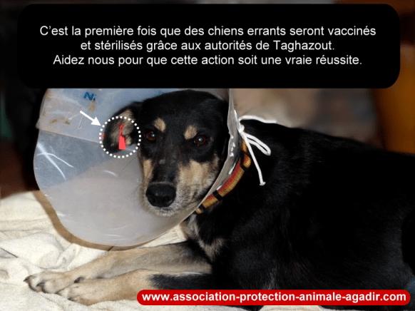 association-protection-animale-agadir-taghazout-08