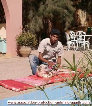 association-protection-animale-agadir-taghazout-11
