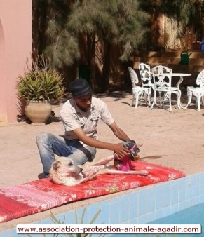 association-protection-animale-agadir-taghazout-14