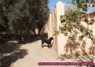 association-protection-animale-agadir-13