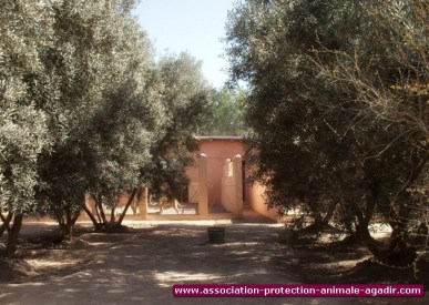 association-protection-animale-agadir-15