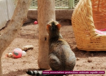 association-protection-animale-agadir-21