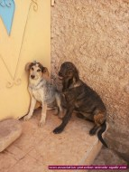 association-protection-animale-agadir-35